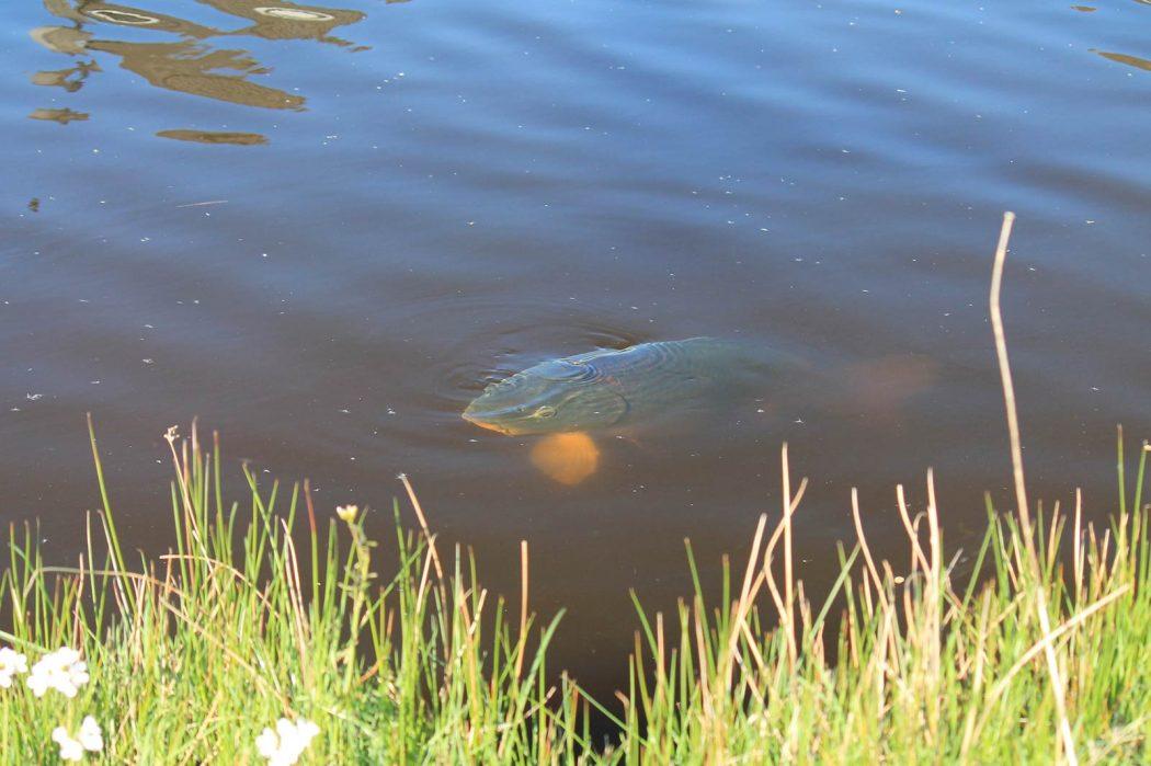De kracht van zonlicht: hoe de zon vertelt waar je moet vissen!